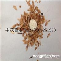 香椿种子的价格