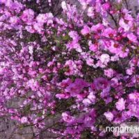 常年供应各种绿化苗木