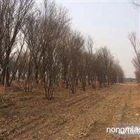 园林施工  苗木供应