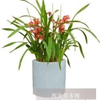 泉州绿植花卉盆景租摆供植物租赁