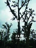 供应2-40公分榉树、朴树、榔榆