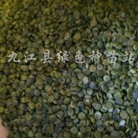 供应紫荆种子