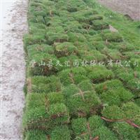 供应结缕草
