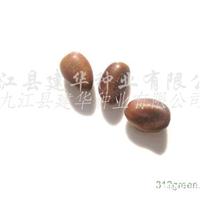 供应皂角种子