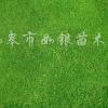 供应麦冬、红花酢浆草、紫叶红花酢浆草、鸢尾等