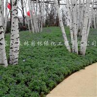 供应草花花卉