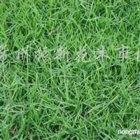 供应百慕大黑麦草混播草、麦冬草、天富道草坪等