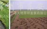 供应果岭草沙坪皮卷
