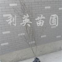供应花石榴