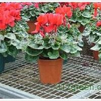 供应苗床网、温室苗床网、花卉苗床网、热镀锌苗床网