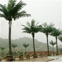 供应聚珍苑仿真植物D380椰子树