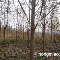 供应各种绿化工程用树