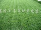 供��草坪