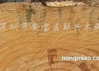 供��松木