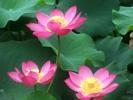 供应水生植物种植