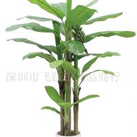供应芭蕉树、仿真植物、人造树