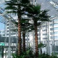 供应室外棕榈树.仿真棕榈树.人造榈榈树.仿真植物