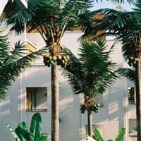 供应室外椰子树.仿真椰子树.人造椰子树.人造植物.