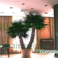 供应棕榈树,古榕树,仿真植物