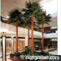 供应天然保鲜棕榈树