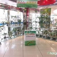 供应水培花卉