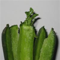 潍坊青萝卜种子优惠销售