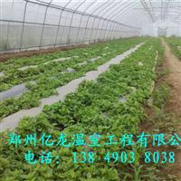 育苗温室大棚建造花卉大棚价格