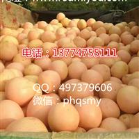大三红蜜柚苗供应