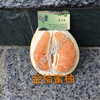 金橙蜜柚苗价格