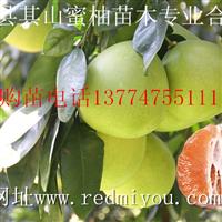 橙皮黄肉蜜柚苗价格