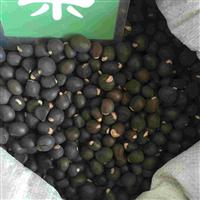 辽宁省文冠果种子/东北文冠果种子