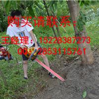 龙州园林移植挖树机挖树机供应商