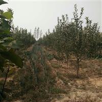 出售苹果树,山楂树