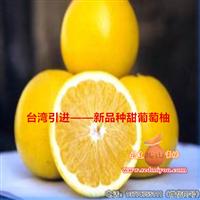 新品种葡萄柚苗|福建甜葡萄柚苗