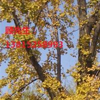 苏州庭院景观设计绿化公司景观树厂家苗木