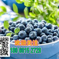 怀化蓝莓苗 种子 苗木  山瓜瓜