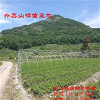 甘平柑橘苗 源自日本 产自象山新奇橘苗场