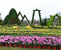 五色草造型,节日立体花坛,植物绿雕