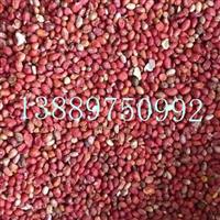 丝绵木种子价格一览表