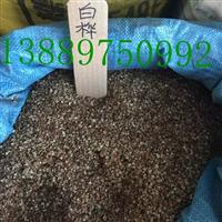 三角枫种子价格一览表