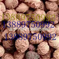 臭李子种子价格一览表