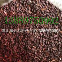 云杉种子价格一览表