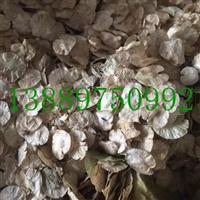 白榆种子价格一览表