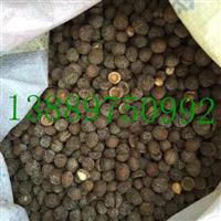 榆叶梅种子价格一览表