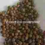 紫叶稠李种子价格一览表