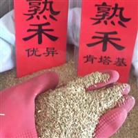 早熟禾种子价格一览表