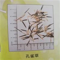孔雀草种子价格一览表