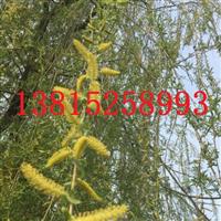 苏州庭院别墅景观绿化工程、苏州苗圃苗木