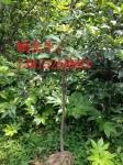苏州园林绿化公司、苏州景观工程绿化设计