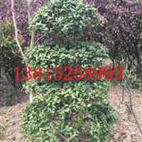 苏州别墅景观绿化公司、苏州庭院别墅景观